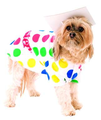 Dog Twister Costume