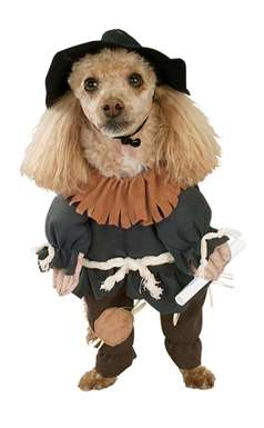 Scarecrow Dog Costume - Wizard of Oz